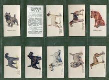 Cigarette cards set Dogs ,Beagle,Terrier,Whippet, Pekingese, Bulldog
